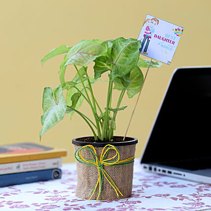 Syngonium Plant For Daughter's Day: Gifts for Daughters Day