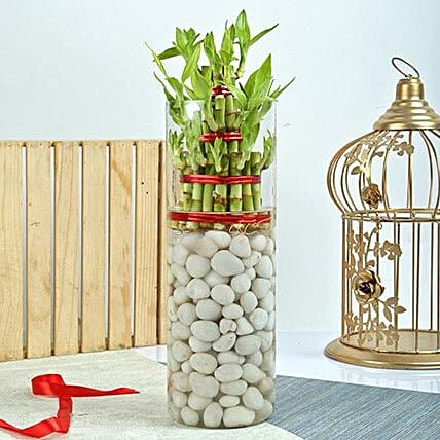 Three Layer Bamboo Decor Terrarium: Terrariums Plants