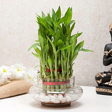 Three Layer Bamboo Good Luck Terrarium: Indoor Plants