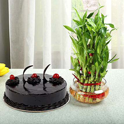 Truffle Cake N Three Layer Bamboo Plant: Gifts to India