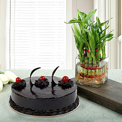 Truffle Cake N Two Layer Bamboo Plant: Cakes N plants