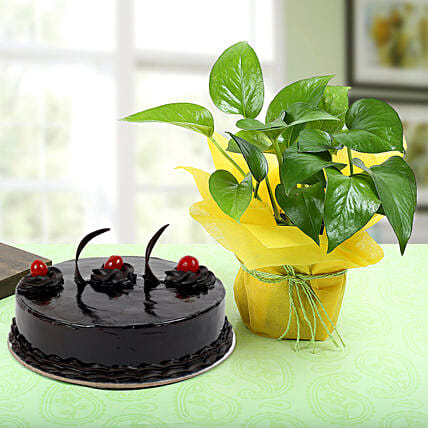 Truffle Cake With Money Plant: Cakes Combo