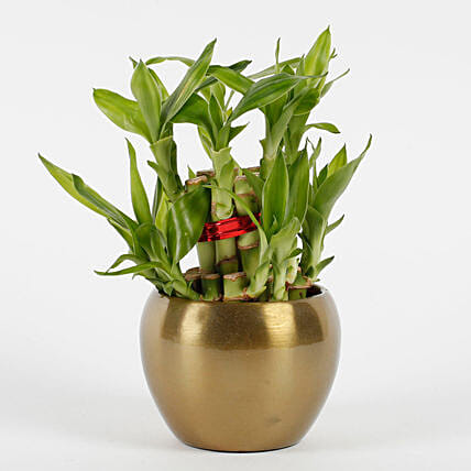Two Layer Bamboo Plant in Copper Orchid Metal Pot: Indoor Plants