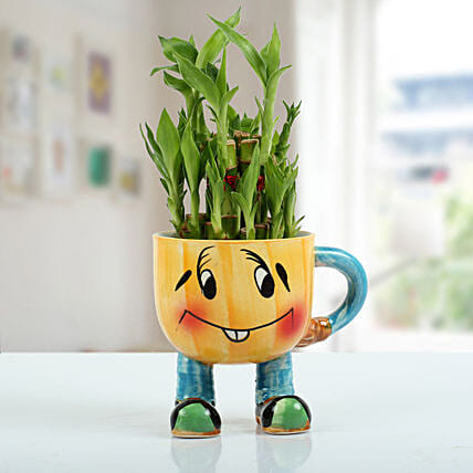 Two Layer Bamboo Plant With Smiley Vase: Indoor Plants