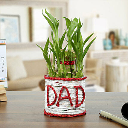 A Lucky Gift For Father: Tropical Plants