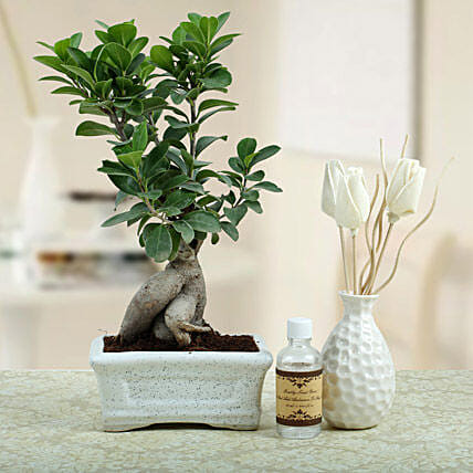 Bonsai N Oil Diffuser: Potted Plants