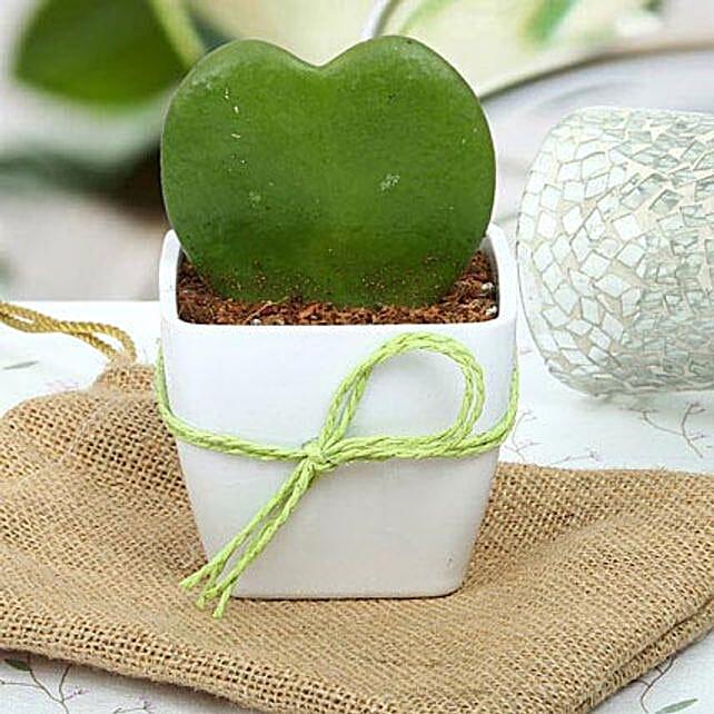 Cute Love Plant: Indoor Plants