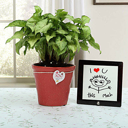 Love Is Everywhere: Plant Combos