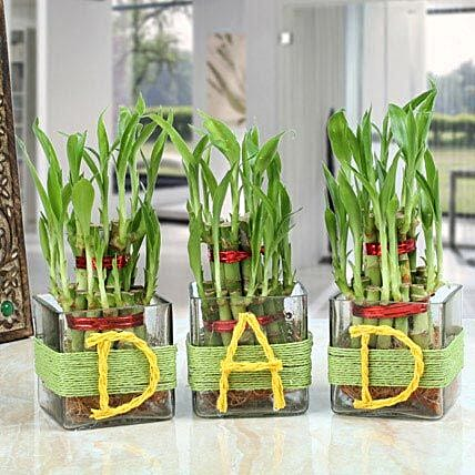 Three Lucky Bamboo Plants For Dad: Send Good Luck Plants
