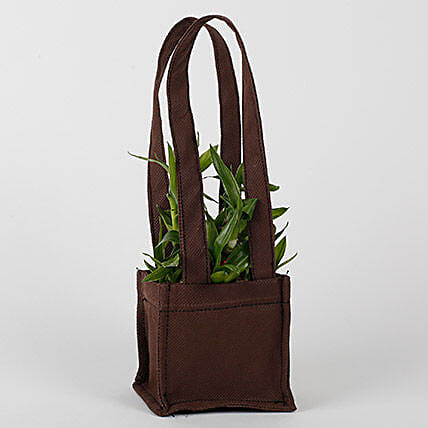 Two Layered Bamboo in Coffee Brown Bag: Lucky Bamboo Plants
