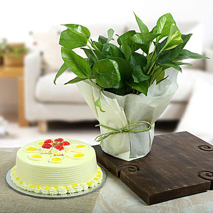 Butterscotch Cake N Lucky Money Plant: Potted Plants