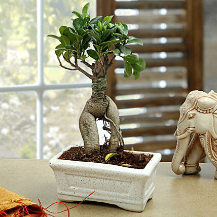 Marvellous Bonsai Plant: Send Gifts to Mewat