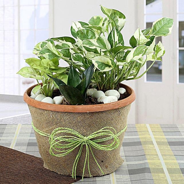 Air Purifying Dish Garden: Air Purifying Plants