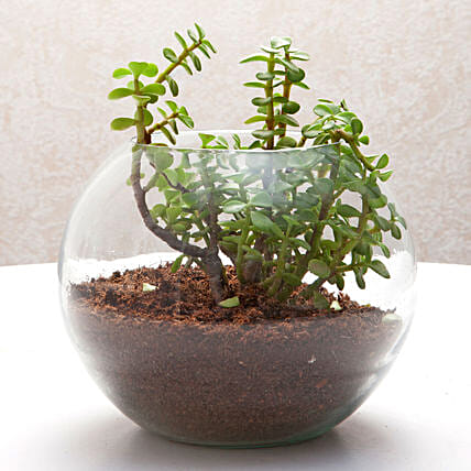 Fantastic Jade Terrarium: Bathroom Plants