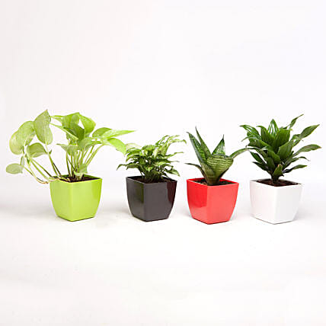 Set of 4 Green Plants in Beautiful Plastic Pots: Feng Shui Gifts