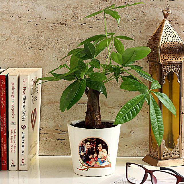 Pachira Bonsai in Personalised Photo Ceramic Pot: Personalised Pot plants