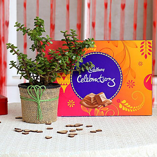 Jade Plant & Cadbury Celebrations Combo: