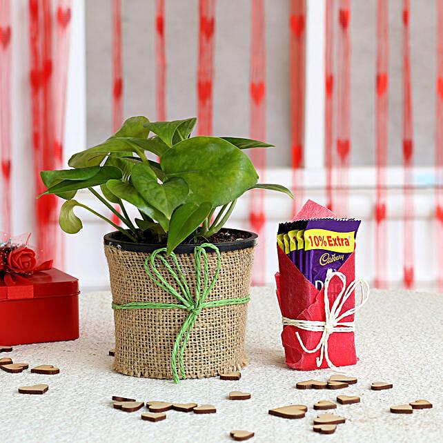 Money Plant in Black Pot with Cadbury Dairy Milk: Cadbury Chocolates