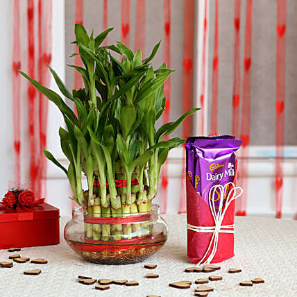 Three Layer Lucky Bamboo with Dairy Milk Silk: