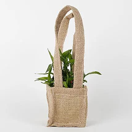 Carry Lucky Bamboo Plant Around: Feng Shui Gifts