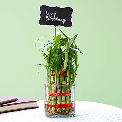 2 Layer Bamboo Plant For Happy Birthday: Plants for Girlfriend