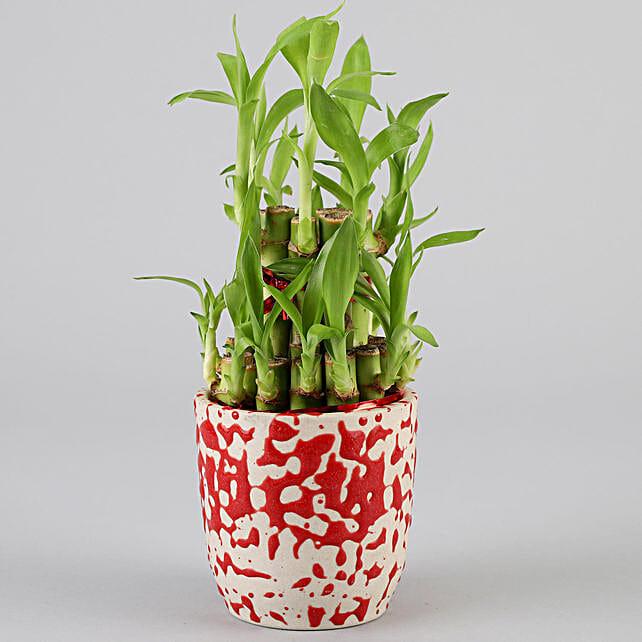 2 Layer Bamboo In Designer Ceramic Pot: Bamboo Plants