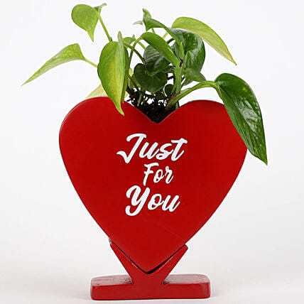 Money Plant In Just For You Ceramic Pot: Money Plant