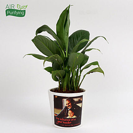 Attractive Personalised Peace Lily Plant: Air Purifying Plants