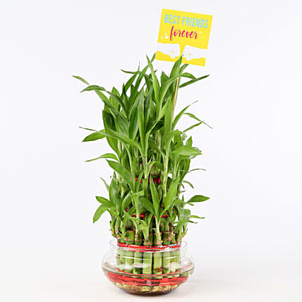 Friends Forever Three Layer Bamboo Plant: Gifts For Friendship Day