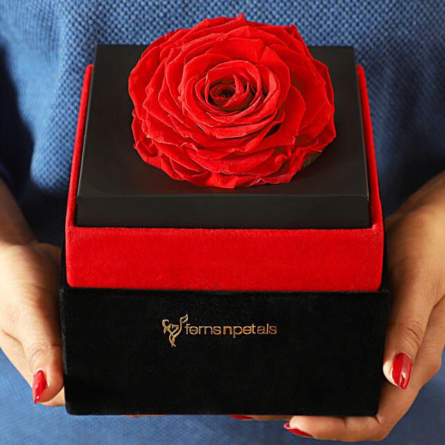 Big Forever Red Rose in Black Velvet Box: