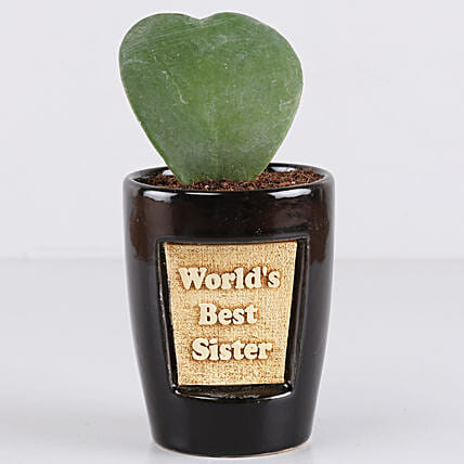 Hoya Plant For Best Sister: Rare Plant Gifts
