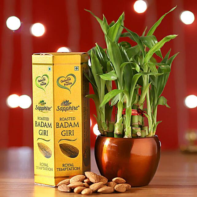 2 Layer Bamboo Brass Pot & Almonds: Lucky Bamboo Plants