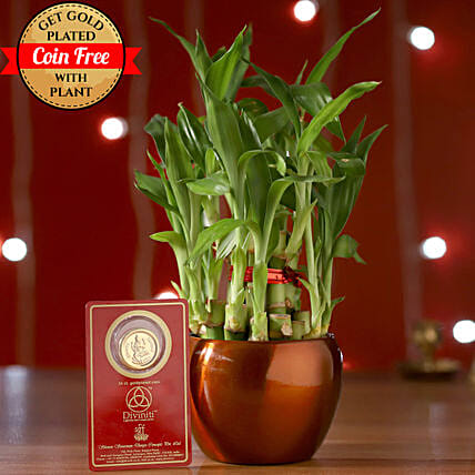 Free Gold Plated Coin With 2 Layer Bamboo Plant: Ornamental Plants
