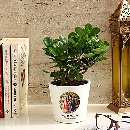 Ficus Dwarf Plant in White Personalised Ceramic Pot: Air Purifying Plants