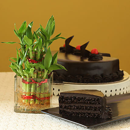Truffle Cake N Two Layer Bamboo Plant: Feng Shui Gifts