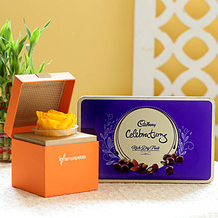 Yellow Forever Rose & Cadbury Dry Fruit Collection: Gift Combos