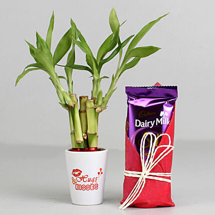 Bamboo Plant In Hugs & Kisses Pot & Dairy Milk Silk: Plant Combos