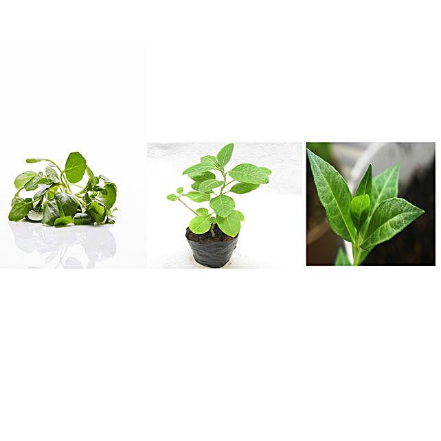Water Cress Ashwagandha & Mehendi Seeds Combo: Herbs Seeds