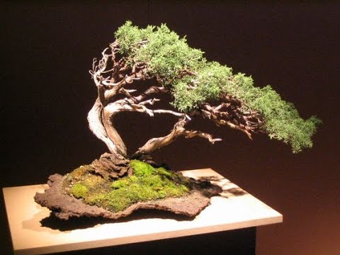 Windswept Bonsai