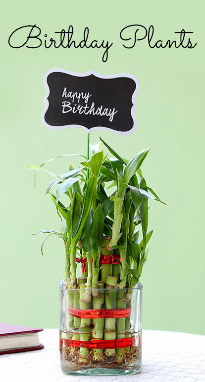 Birthday Plants