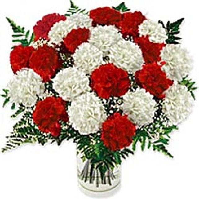 Carnation Fascination hai