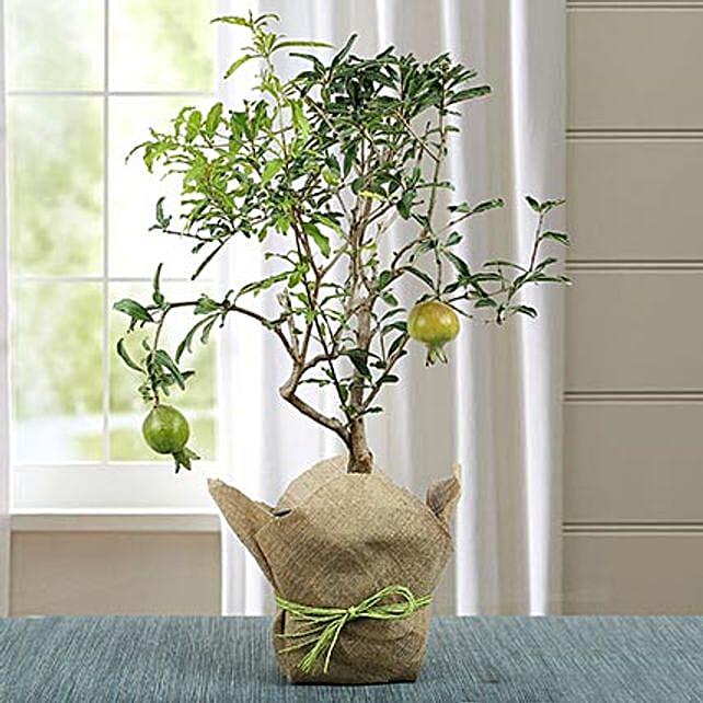 Pomegranate for Taurus