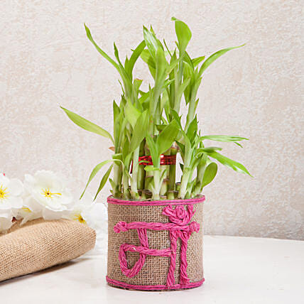 Birthday gifts for mother birthday gift ideas for mom ferns n petals sincerely yours mom lucky bamboo plant birthday gifts for mother negle Image collections
