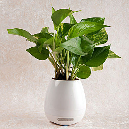 Smart Singing Money Plant