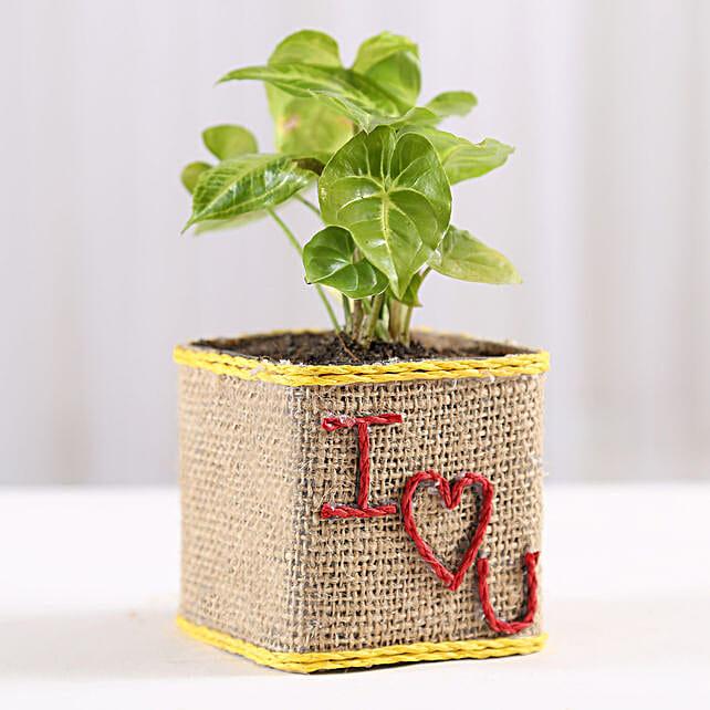 Valentine Special Syngonium Plant