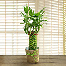 Send easter gifts online shop easter gift ferns n petals wheel bamboo plant easter gifts negle Choice Image