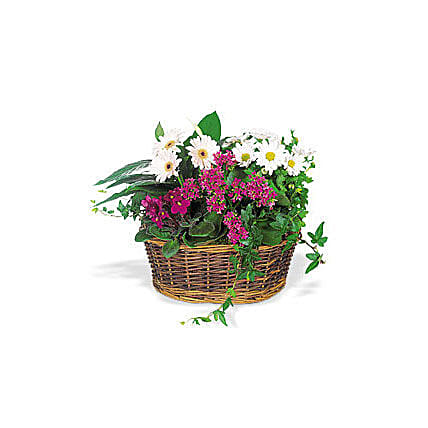 Send a Smile Flower Basket